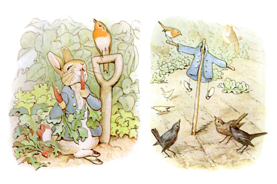Peter Rabbit in Mr McGregor's garden eating carrot and jacket as scarecrow from Tales of Peter Rabbit, original edition