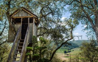 Tree house in sunny garden