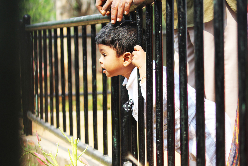 Young child leaning through railings to see something