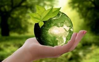The globe held in a hand, with a green leaf growing on it