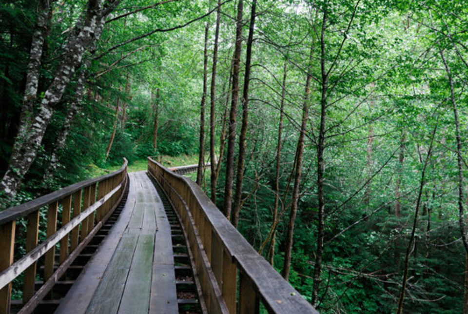 Wooden track framed by trees