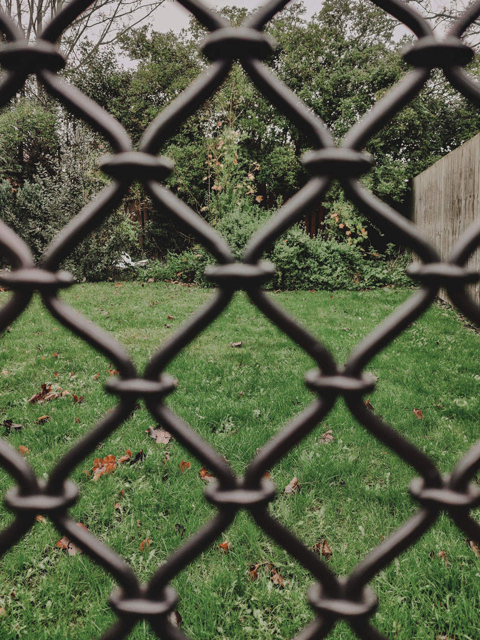 Focus on garden in distance with fence out of focus at forefront