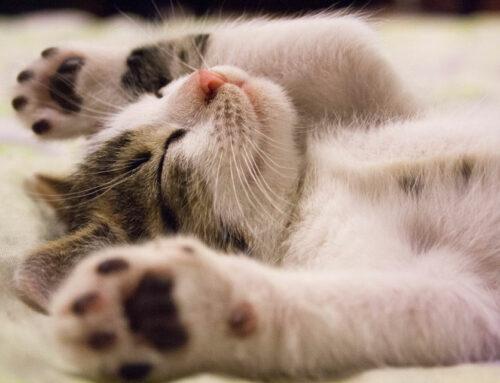 Flexi-Cat Diaries 2021 – Reasons to be Cheerful: Lockdown Three